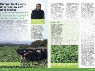 In-Field-Focus Beet Grazing For Beef